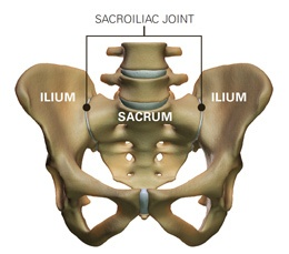 sacroiliac joint (si joint) dysfunction | si dysfunction, Muscles